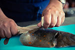 Le Gargantua | French Cooking Course | Filleting Plaice